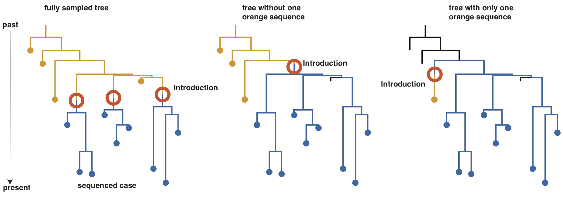 Parts of a phylogenetic tree